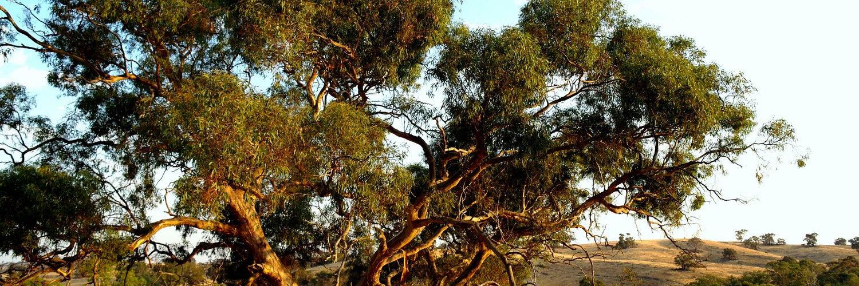 Redesdale bushland